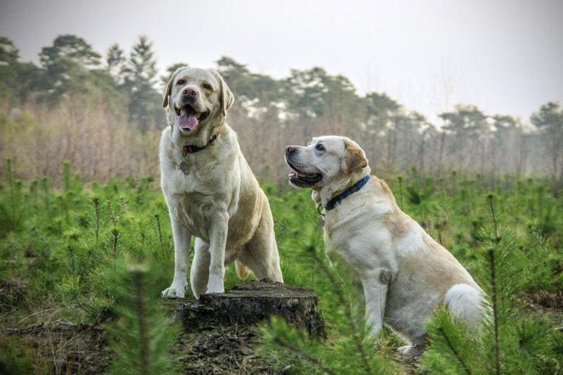 Det bedste til dig og din hund