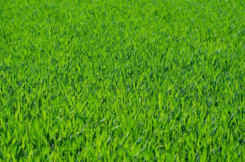 Med rullegræs får du nemt og hurtigt græs på plænen